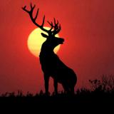 鹿狩りライブ壁紙無料